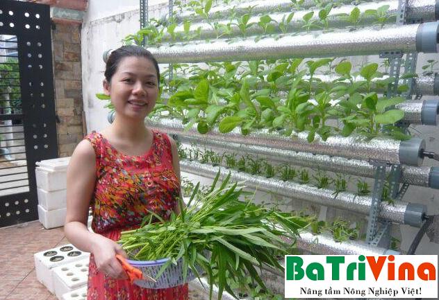 Giải pháp trồng rau sạch thủy canh tại nhà bằng viên nén ươm hạt